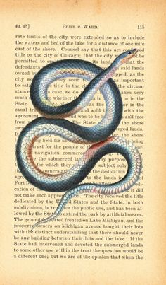 Vintage Snake Illustration Print on Old Antique by Larks Eye Design, $10.00