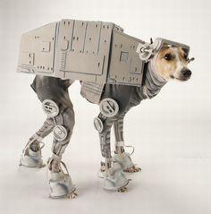 haha poor dog