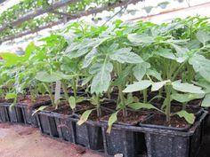 Une nouvelle recette du Gâtinais français vient d'être publiée : Troc de plantes  - http://www.parc-gatinais-francais.fr/evenements/troc-de-plantes/