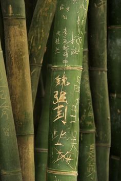 and as the guests entered the garden they found beautiful messages carved into bamboo....