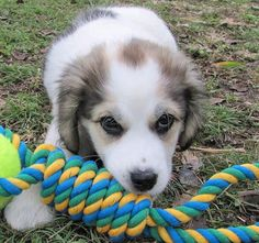 Do's and Don'ts Of Teaching Your Puppy Proper Socialization Skills