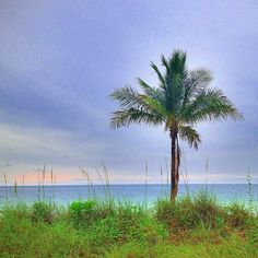 The tree by the grass by the ocean