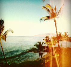Ocean Palm Trees and Beauty