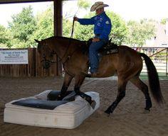 Photo/Video Gallery - Bombproof Horsemanship
