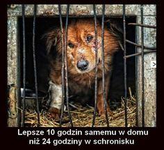 grazmiko – Google+ Save Life, Lion, Sad, In This Moment, Memes, Animals, Doggies, Quotes, Education