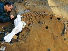 excavations kalkriese - Recherche Google
