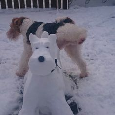 "Most wire hair fox terriers are ""Tri-color"", so it appears ""Artist"" Dave the wire hair fox terrier adds color to his snow-pal :-)"