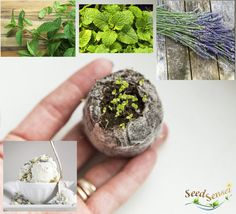 #Housewarming #gift #plant #seed #growing kit #dessert #herbs by TheSeedSensei