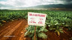 Deadly Agent Orange GMOs receive USDA approval despite overwhelming risks to humans, environment