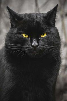 Sensationnelles photos de chats de gouttière | BuzzFil - votre dealer d'emotion