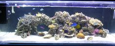 aquascaping reef tank - Google Search