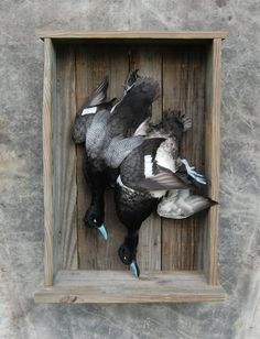 Duck Hunting Chat • Thinking about a dead mount : Taxidermy Forum
