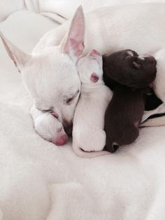 tenderness love