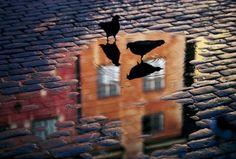 Pigeons by Allan Wallberg