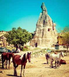 Horses in Cappadocia, Turkey