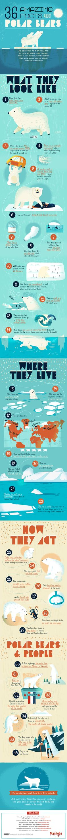 36 Amazing Facts About Polar Bears | Care2 Healthy Living