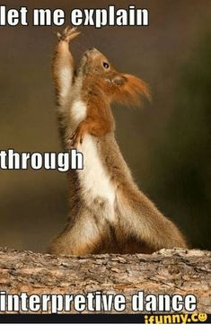Enjoy funny animal memes that include cat memes, your favorite dog memes, funny squirrel memes, cute bear memes and a lot more that will make you laugh! Cute Animal Memes, Funny Animal Photos, Cute Animal Videos, Animal Quotes, Animal Pics, Funny Squirrel Pictures, Squirrel Memes, Funny Pictures, Squirrel Art