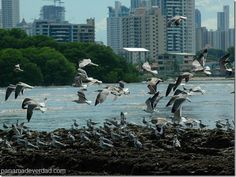 Panamá: Activistas abogan por instalación de comisión ambiental distrital - http://panamadeverdad.com/2014/09/04/panama-activistas-abogan-por-instalacion-de-comision-ambiental-distrital/