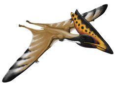 Thalassodromeus < Thalassodromidae.