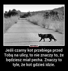 Jeśli czarny kot przebiega przed… » Bezuzyteczna.pl | Codzienna dawka wiedzy bezuzytecznej Country Roads, Humor, Memes, Funny, Life, Cheer, Meme, Jokes, Ha Ha