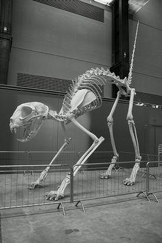 giant cat bones