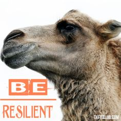 Resilience is a combination of determination persistence driven by passion. It simply means, not quitting or giving until you get what you want. Get What You Want, Determination, Feel Good, Camel, Insight, Strength, Spirituality, Positivity, Wisdom