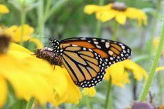 Articles, Tips & Advice Butterflies, Articles, Advice, Bees, Artwork, Painting, Inspiration, Photos, Biblical Inspiration