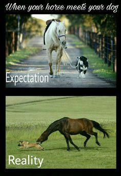 Horse Memes When your horse meets your dog