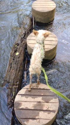River stump jumping