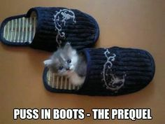 Puss-in-Boots The Prequel Crazy Cat Lady, Crazy Cats, Kittens Cutest, Cats And Kittens, Kitty Cats, Cute Funny Animals, Funny Cats, Cat Puns, White Cats
