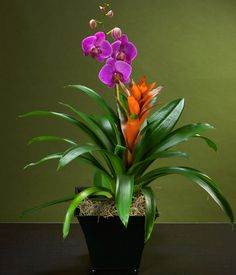 Purple Phalaenopsis & Orange Bromeliad