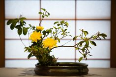 "Ikebana (生け花, ""living flowers"") is the Japanese art of flower arrangement, also known as kadō"