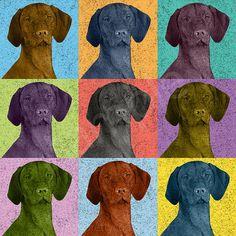 Vizsla TShirt  Vizsla dog Pop Art VintageTee by prettycooltees, $22.99