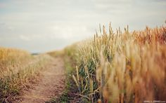 Country Field Road Wallpaper
