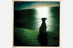 His Sunset