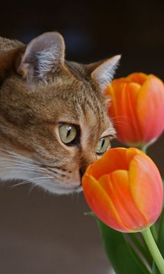 Smelling to spring