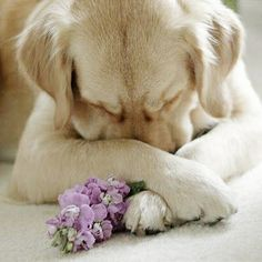 Love the doggy. ♡... re-pin by www.StoneArtUSA.com ~ affordable custom pet memorials for everyone.