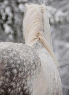 dapple grey...my first love
