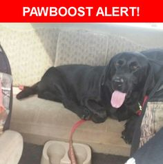 Please spread the word! Bear was last seen in San Antonio, TX 78264.  Description: Not Neutered Friendly colar Black  Nearest Address: Single Tree Drive, San Antonio, TX, United States