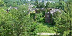 NY Asylum consumed by ivy x #abandoned #asylum #consumed #photography