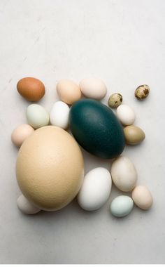 A variety of eggs. I'm not sure what they all are but I think the big teal one is an emu egg.