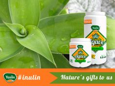 Yasín´s Inulin: the energy food of the twenty first century. Here are some benefits of Inulin: * Strengthens the immune system. * Prevents hypoglycemia. * Eliminates constipation. * Decreases the tendency for diarrhea. * Provides steady energy.  Do you know any other benefits? Share! #healthy #inulin #agave