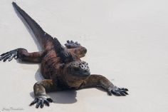 solo travel the Galapagos on the cheap