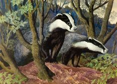 Charles Tunnicliffe C F Tunnicliffe Baron Fine Art Gallery