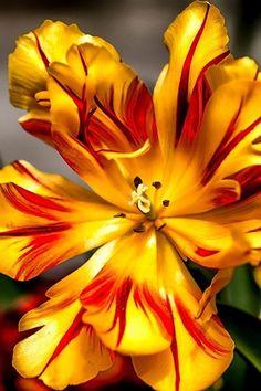 Gold flower<3