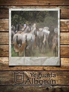 Ejemplares de Yeguada Alborán criados en libertad.