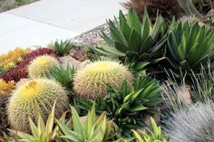 """Jud's four-year-old Agave-and-xeric-plants garden fronting two streets in Long Beach, California. Photo by Denise Maher: """"From the street, it manages to make an impact at 25 mph. Up close, it completely disorders the senses."""""""