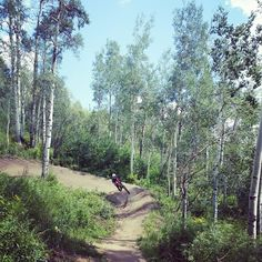 Awesome Flow Trail at @steamboatresort We LOVE Downhill