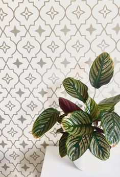 ✨Come on...you know you want to...come have a browse on our website magicwallpaper.co.nz for our Moroccan star pattern in grey