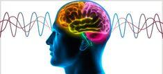 Optimizing Brain Fitness (www.shopgreatcourses.com) $50